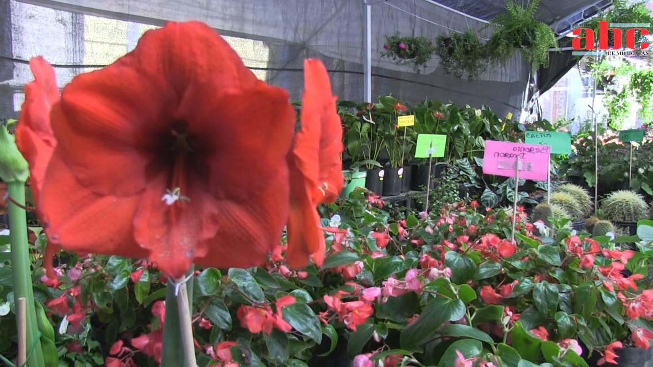 4 de abril de 2012 expo plantas de ornato primavera 2012