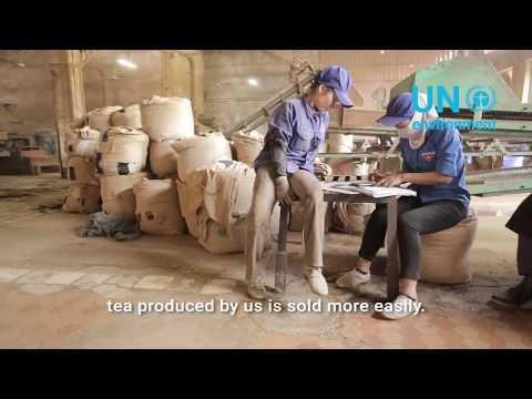 Greening Vietnam's Tea Industry