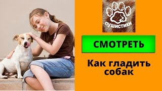 Гладить собак смешная подборка с собаками для детей и взрослых  Как выбрать собаку для ребенка