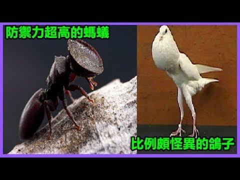 26種世界上的「超珍稀動物」。沒人能把這些動物的名字都正確叫出來! - YouTube