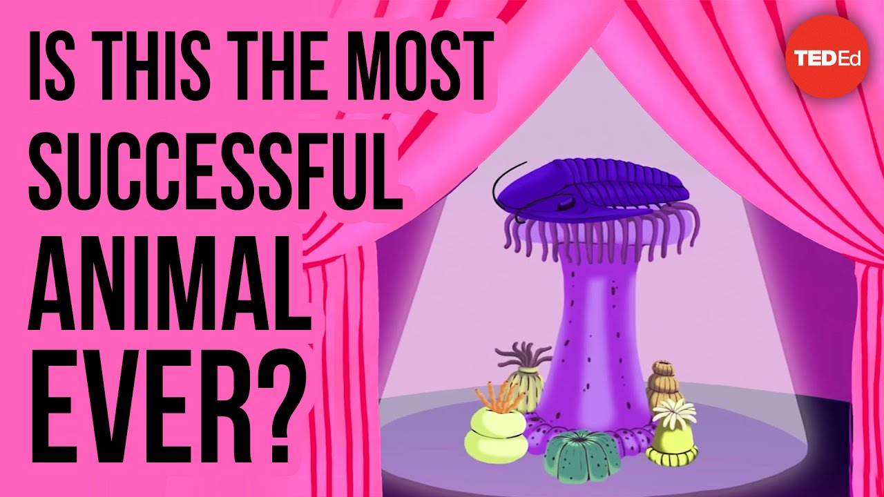 Is this the most successful animal ever? - Nigel Hughes