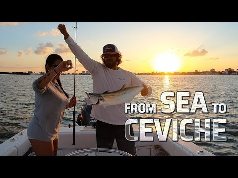 How To Catch Spanish Mackerel In The Bay (Catch, Clean & Cook)