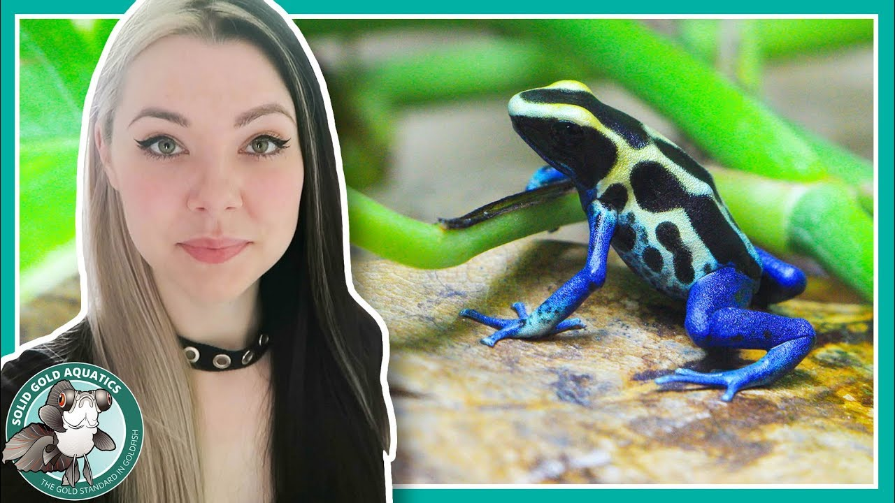 my-dart-frogs-have-gotten-so-big-vlogmas-day-1