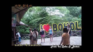 보홀 섬 데이투어 (Bohol day trip)