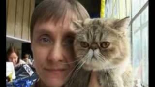 Выставка кошек Донецк
