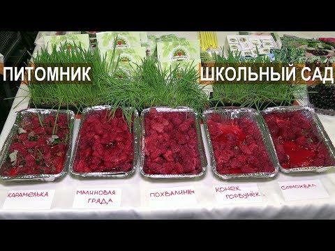 Вопрос: Какую ягоду в России выращивали в монастырских садах и называли агрыз?
