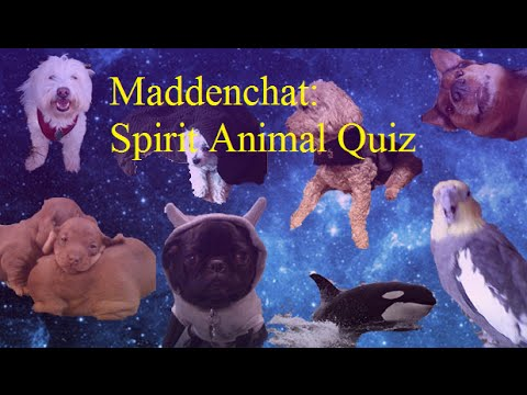 Maddenchat: Spirit Animal Quiz