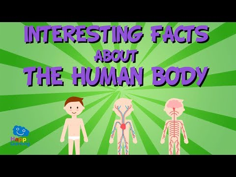 Interesting facts about The Human Body | Educational Video for Kids.