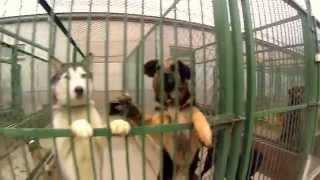 Psy ze Schroniska dla zwierząt w Bełchatowie ;-) szukają przytulnego domu ;-)