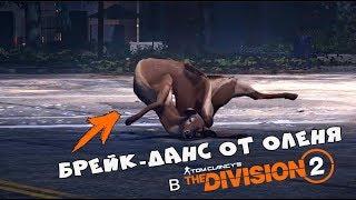 БРЕЙК-ДАНС от оленя в Division 2, ленивая лошадь в RDR2 и другие баги и приколы из игр недели - #49