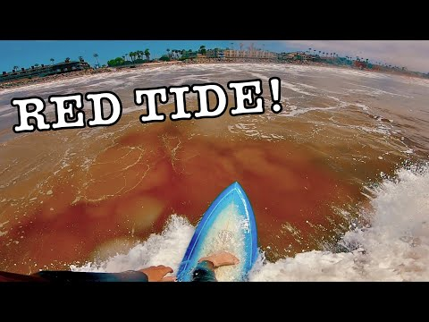 SURFING DURING RED TIDE In CALIFORNIA (CRAZY!!)