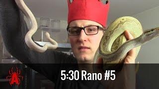 5:30 ☕️ #5 Który wąż jest NAJLEPSZY?