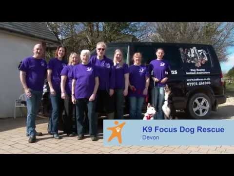 Petplan & ADCH Animal Charity Awards 2015 - K9 Focus Dog Rescue - Team of the Year