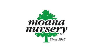 Moana Nursery Greenhouse Ad