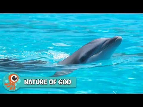 Dolphins | Whales, Waves, and Ocean Wonders Preview Clip | Nature of God  | JellyTelly