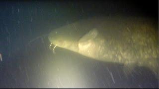 Часть 2 Путешествие на рыбалку  и адреналинистую подводную охоту на Балхаше(В данном видео о рыбалке и подводной охоте на Балхаше я описываю события нескольких дней пребывания на..., 2014-04-28T11:53:31.000Z)