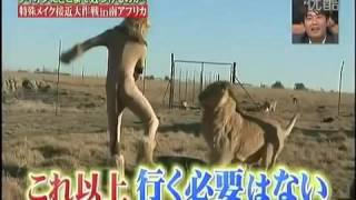 Lion Japanese Prank Disguise