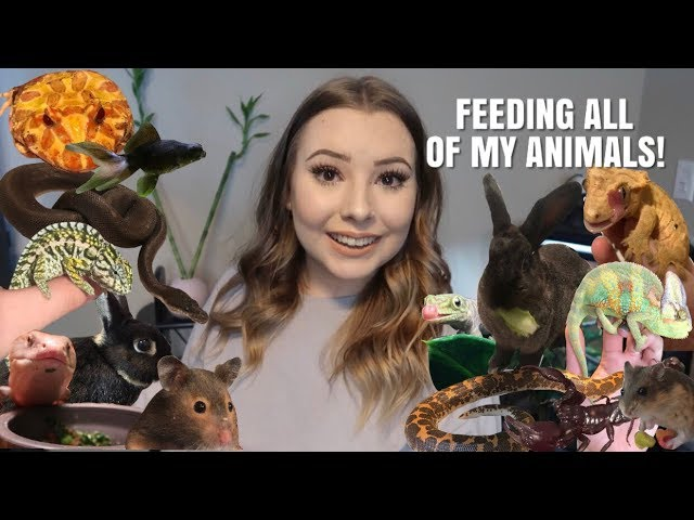 feeding-all-of-my-pets