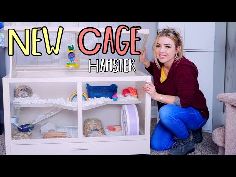 My New Hamster Cage Setup | New Age Pet Ecoflex Small Animal Hutch
