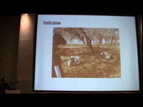 Riccardo Pansini: Cooperation in wild vervet monkeys