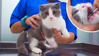Kitten Visits The Vet For Cat Flu *First Time*