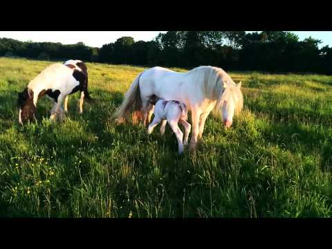 2 minutes of horses eating grass.