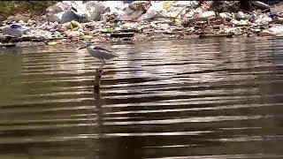 Special Report: Critical habitat near Manila Bay under threat from trash