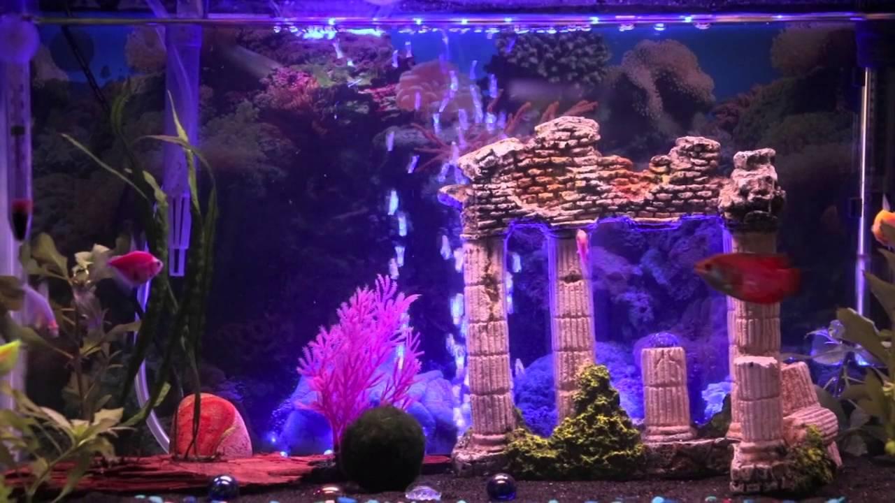 new glofish 10 gallon aquarium pina colada song youtube