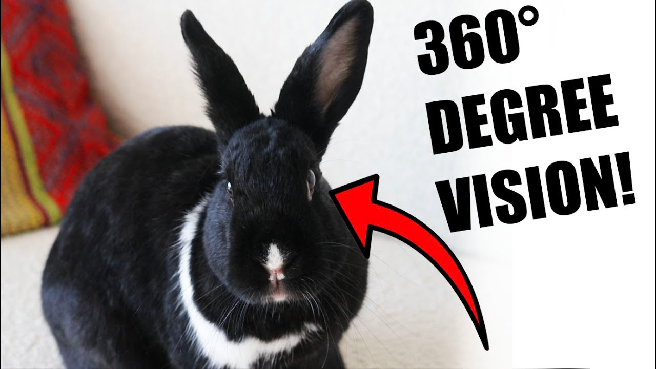 12 Most Fascinating Facts About Rabbits!