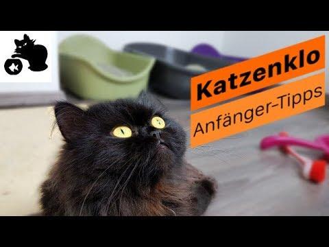 🔥Katzenklo Tipps für Anfänger - Katzenklo reinigen - Gerüche entfernen -