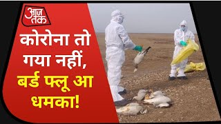 Corona संकट के बीच भारत के इन राज्यों में Bird Flu से दहशत, इंसानों में फ्लू का केस नहीं
