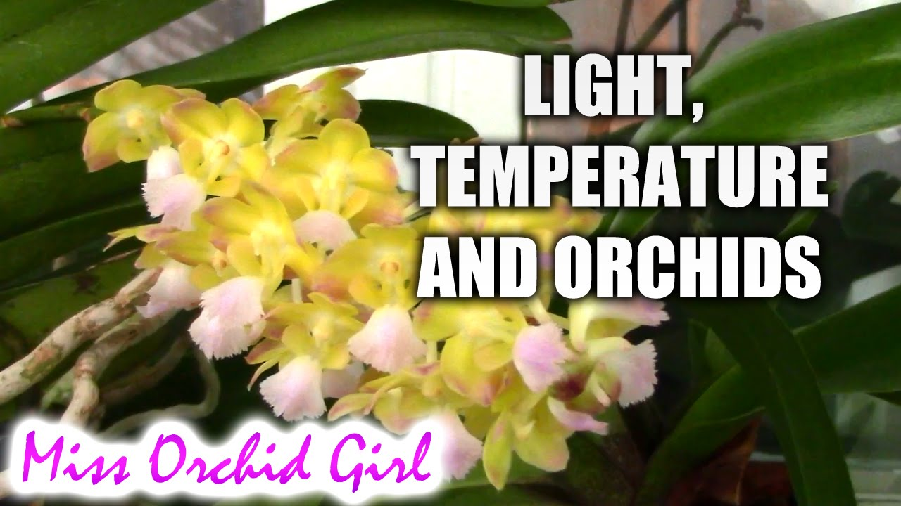 How Do Light And Temperature Affect Orchid Blooms Youtube
