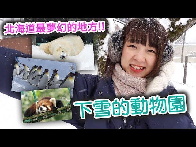 日本動物園的話這裏最推薦你來!狼叫軍團和企鵝大游行太可愛了~♥【北海道之旅(後篇)】