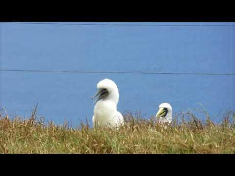 Norfolk Island Bird Tour