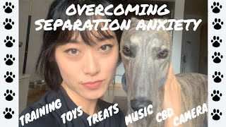 SEPARATION ANXIETY WITH GREYHOUND | OUR EXPERIENCE