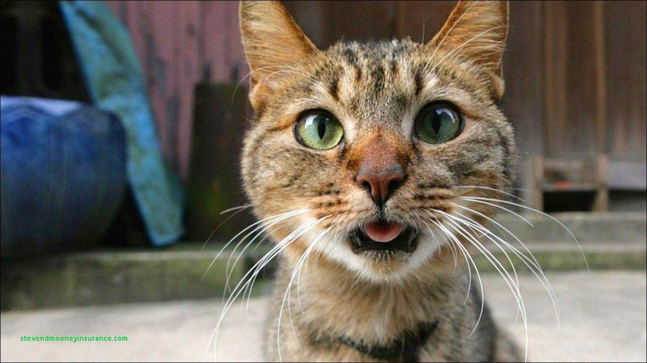 ютуб коты приколы случаях