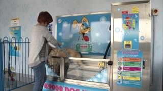 K9000 Dog Wash Demonstration