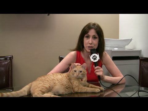 All For Animals TV #47 - Hamlet The New Algonquin Cat