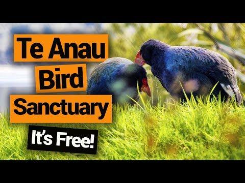 Te Anau Bird Sanctuary –  New Zealand's Biggest Gap Year – Backpacker Guide New Zealand