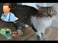 Kedicik Alinayı veterinere götürdük. Alina hamile mi ? eğlenceli çocuk videosu