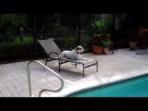 Pitbull Dog Training Jacksonville Florida