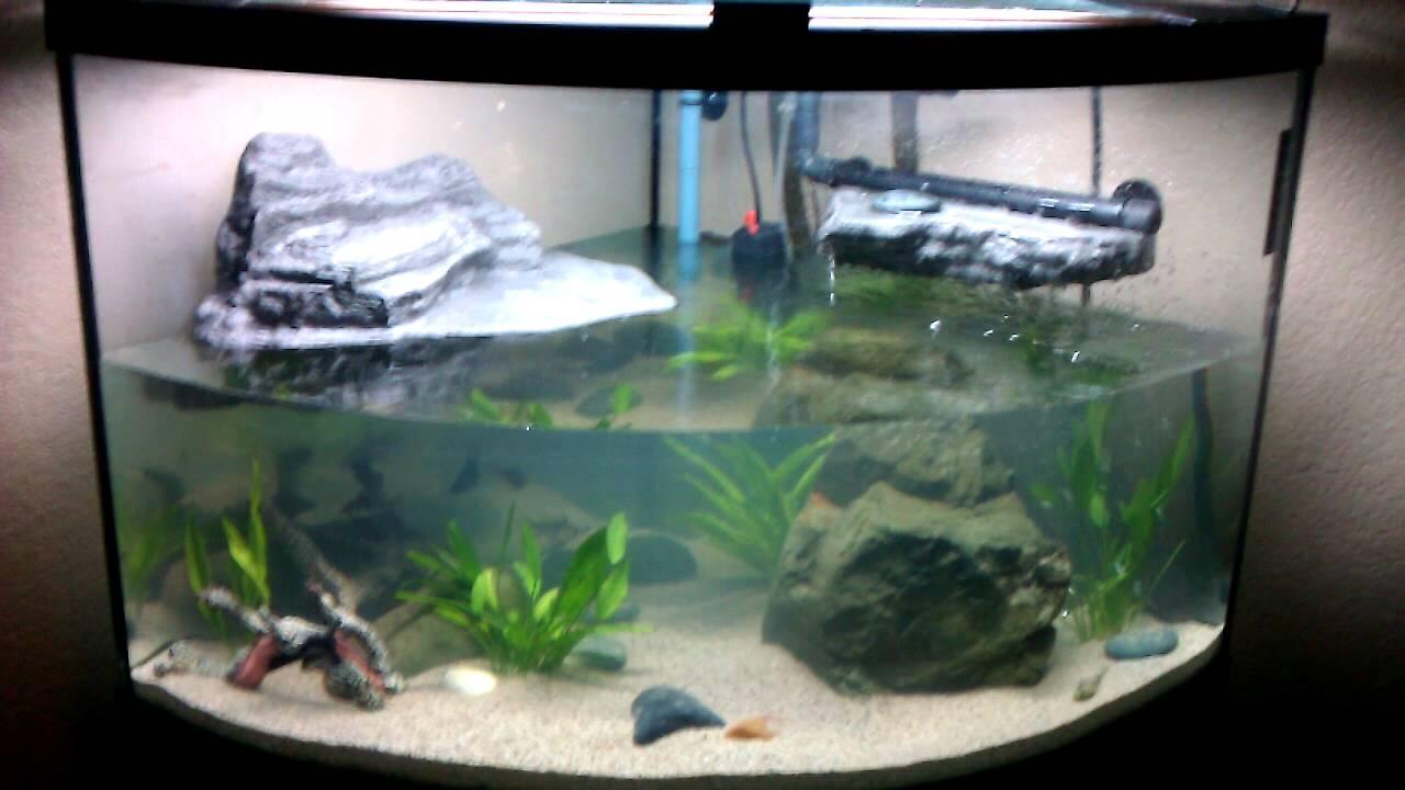 how to setup a tropical fish tank youtube