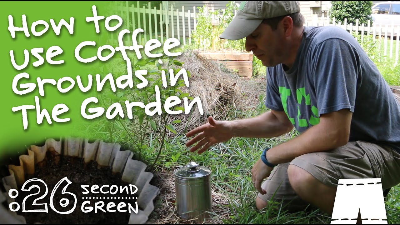 How to re use coffee grounds in your garden youtube for How to use coffee grounds in garden