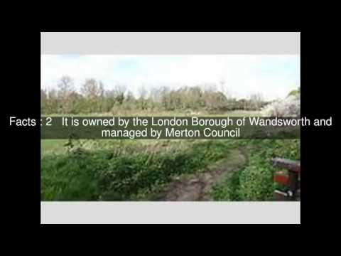 Derwent Floodwash Top  #5 Facts
