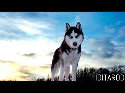 Iditarod - Soon Hee Newbold