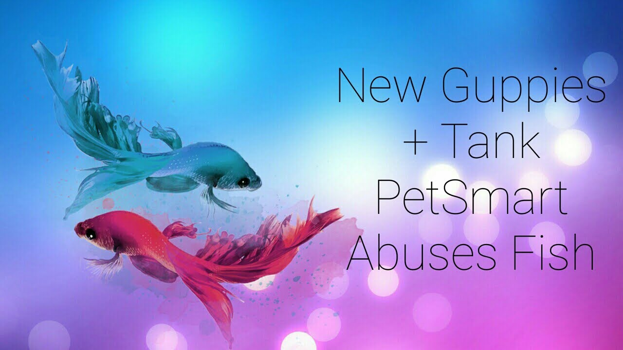New guppies tank petsmart abuses fish youtube for How much are fish at petsmart