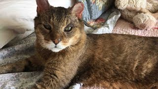 When Her Cat Died, This Woman Wanted Another. Then She Got A Call About A Long-Lost Companion