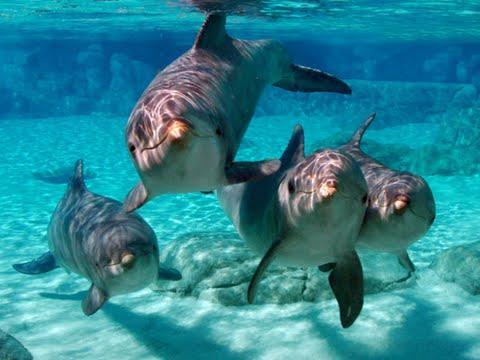 Happy Dolphin   Taken at Seaworld San Antonio, TX Explore Hi…   Flickr