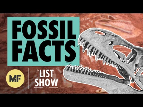 26 Facts About Fossils