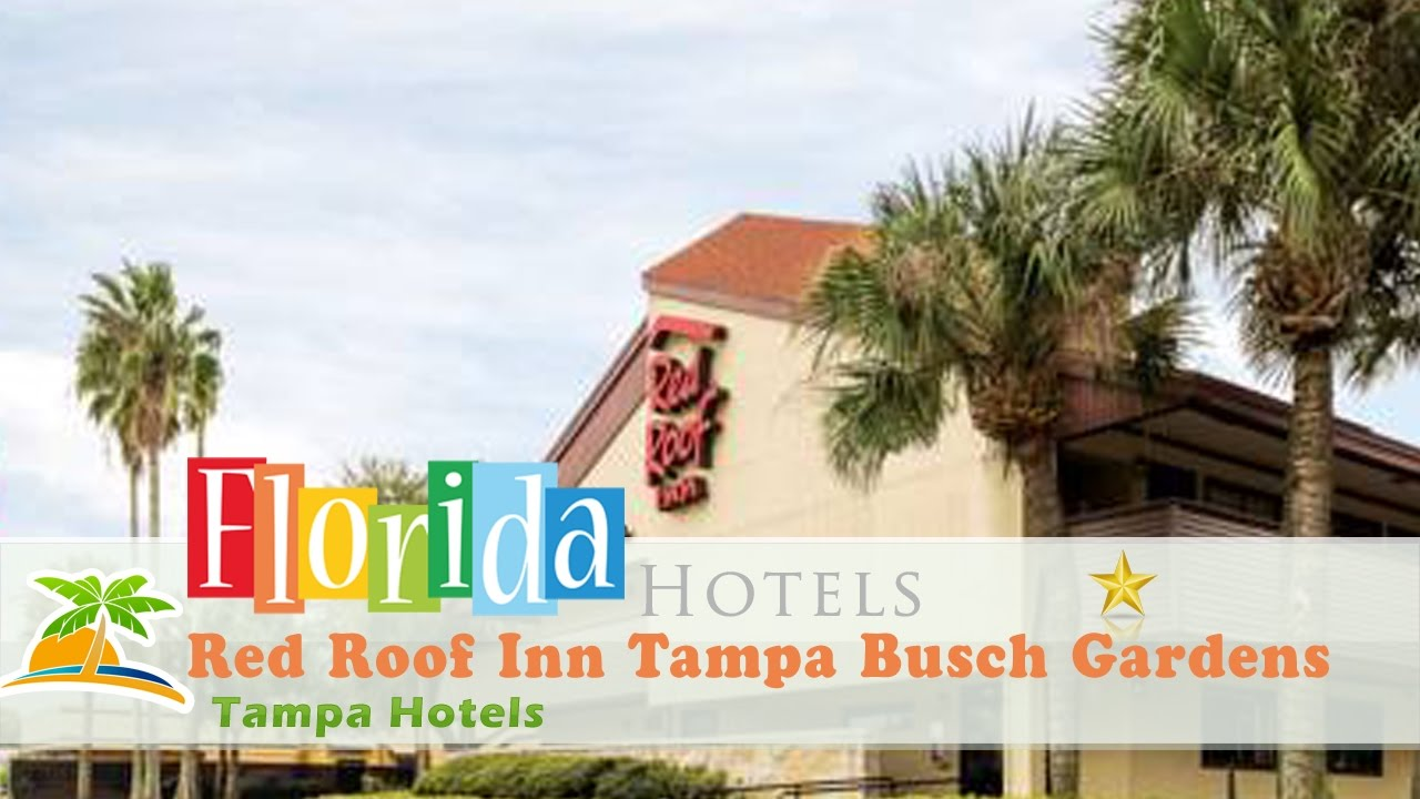 Red Roof Inn Tampa Busch Gardens Tampa Hotels Florida Youtube